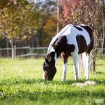 Pferdeshooting Anthering 26102013