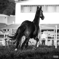 Pferdeshooting Antering 26102013